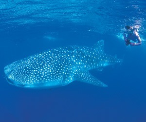 Ningaloo Reef exploration
